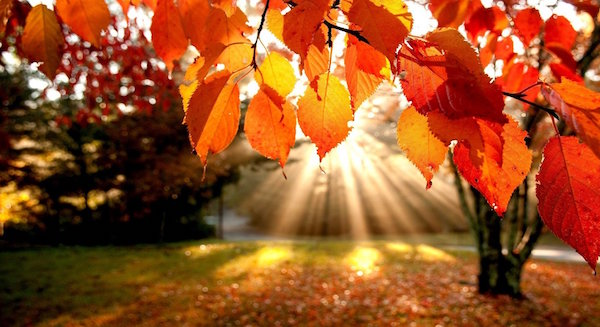 Sunshine-On-Autumn-Leaves