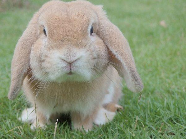 bunny 1149060 640